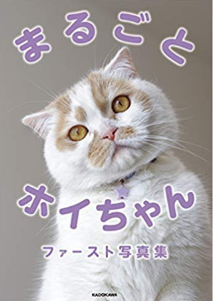 ホイちゃん(猫)が人気の理由は?飼い主や写真集の評判を調査!